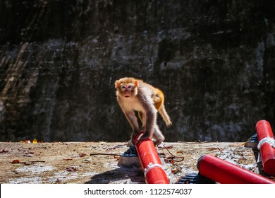 Hong Kong Macaque monkeys