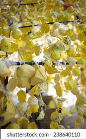 HONG KONG - OCT 15: People hang up the yellow paper umbrealla and make wish during Occupy Central movement in Admiralty in Hong Kong on October 15 2014.
