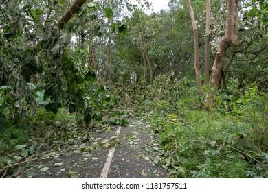 HONG KONG, SEP 17, 2018: Tree fall down and blocking the path, , after Super Typhoon Mangkhut hit Hong Kong