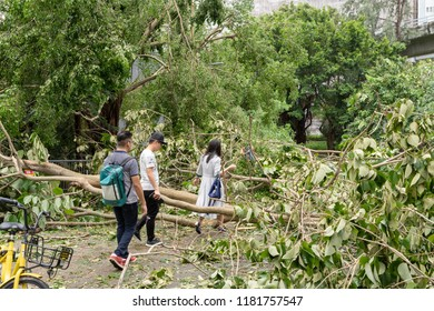HONG KONG, SEP 17, 2018: People finding way between fallen tree , after Super Typhoon Mangkhut hit Hong Kong