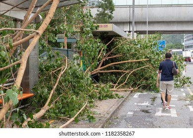 HONG KONG, SEP 17, 2018: Fallen tree blocking path, after Super Typhoon Mangkhut hit Hong Kong