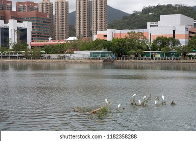 HONG KONG, SEP 17, 2018: Bird nesting on a tree which blow off into river, after Super Typhoon Mangkhut hit Hong Kong