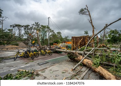 Hong Kong - Sep 18th, 2018: After Typhoon Mangkhut, streets in Hong Kong are covered with fallen trees. Users of sharebike parked their bikes in front of a fallen tree.