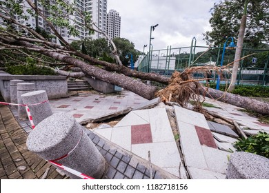 Hong Kong, September 19, 2018: Damage caused by Super Typhoon Mangkhut signal No.10, the highest in Hong Kong storm warning system in 16 Sep 2018