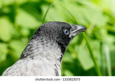 Funny Crow Images Stock Photos Vectors Shutterstock