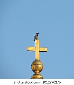 Hooded crow on golden cross