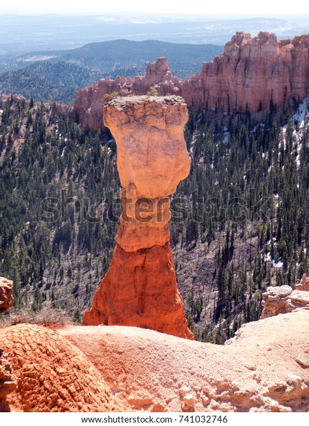 Hoodoo, also known as tent rock, fairy chimney or earth pyramid, among Blue Spruce pine trees and rock formations at Ponderosa Point in Bryce Canyon National Park, Utah
