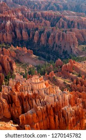 """Hoodoos in the  Bryce Amphitheater, Bryce Canyon National Park, Utah, USA. Hoodoos are tall skinny spires of rock that protrude from the bottom of arid basins and """"broken"""" lands."""
