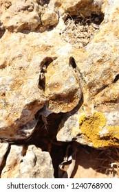 hoof print in a rock