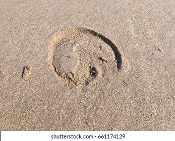 An hoof print in the sand from a miniature Shetland Pony.