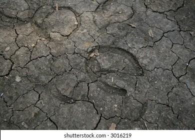 Hoof prints in the ground.