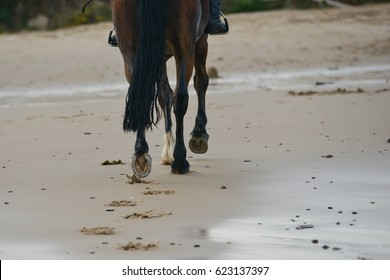 Hoofprints in the sand-close up of horses feet as it leaves trascks in the sand