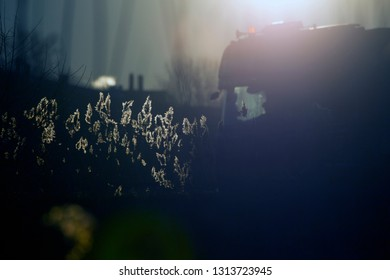 Hoogeveen, the Netherlands- 15 February 2019: feather grass along the A28 motorway