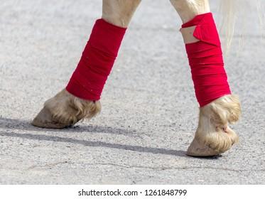 Hooves of a circus horse on asphalt .