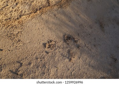 The hooves footprints in the desert