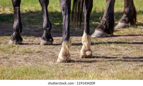 Hooves of a horse on the grass .