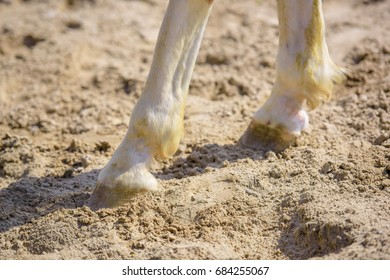 Hooves of a horse at a racetrack