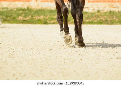 The hooves of a horse riding on sandy terrain. Warm-up