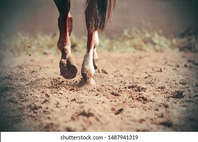 The hooves of a swift, graceful Bay horse with a long tail, running across a sandy arena lit by the sun . The sand from the hooves flying in different directions.