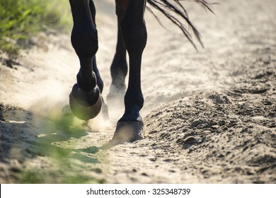The hooves of walking horse in sand dust. Shallow DOF.