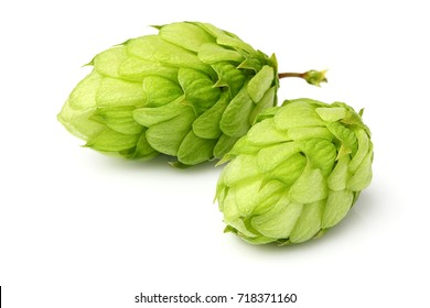 Hop close-up isolated on white background.