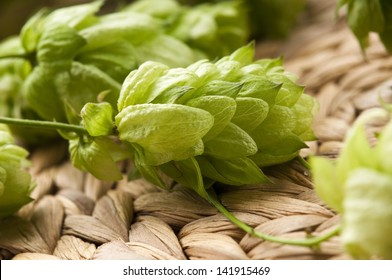 Hop cone and leaves