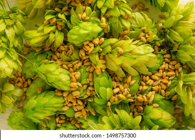 Hop cones and barley grains pile close up image. Concept of beer brewing process. Herbal pattern template on light background. Traditional craft ingredient for brewery