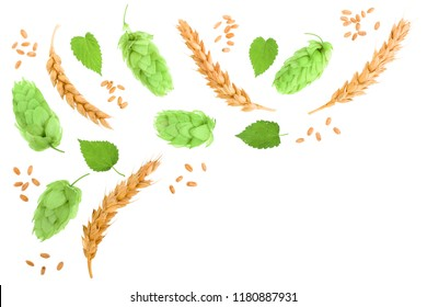 hop cones with ears of wheat isolated on white background with copy space for your text. Top view. Flat lay pattern