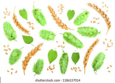 hop cones with ears of wheat isolated on white background close-up. Top view. Flat lay pattern