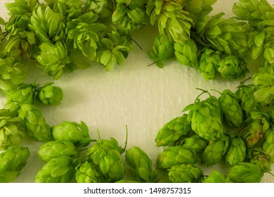 Hop cones green frame with empty oval copy space. Concept of beer brewing process. Herbal pattern template on light background. Traditional craft ingredient for brewery