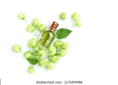 Hop cones (Humulus) with medicinal plant extract in glass bottle isolated on white background. Top view