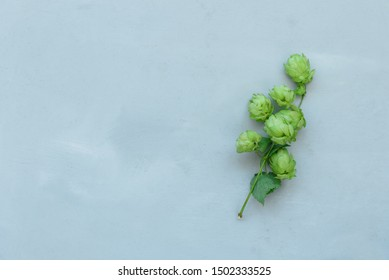 Hop cones on gray wooden background. Harvesting or brewery concept. Top view. Flat lay.