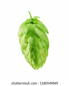 Hop Pub emblem.photo of a fresh green hops on a white background as an element for creating a logo