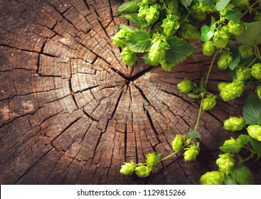 Hop twig over old wooden table background. Vintage style. Backdrop of Beer production ingredient. Brewery. Fresh-picked whole hops art frame design. close-up. Brewing concept wallpaper. Flatlay