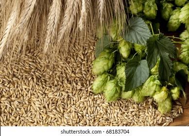 hopcones with barley