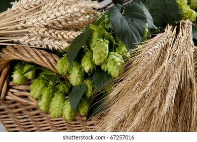 hopcones with wheats