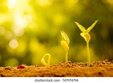 hope concept, germinating seed to sprout of nut in agriculture and plant grow sequence with sunlight and green background