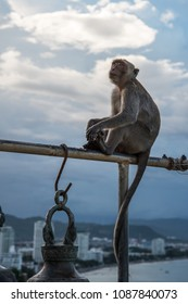 Hopeful look of a monkey high above sitting on the pole of the temple bell, with the city behind, Khao Takieb Temple, Huahin, Thailand