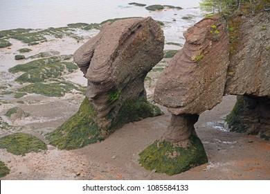 Hopewell Rocks in low tide in Hopewell Rocks Ocean Tidal Exploration Site, New Brunswick, Canada.