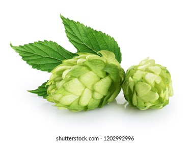 Hops and hop leaf isolated on white background. With clipping path.