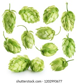 Hops isolated on white background. Collection with clipping path.