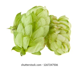 hops isolated on white background
