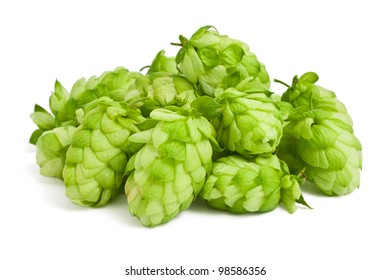Hops on a white background