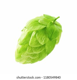 Hops  for packaging  isolated on white background.