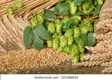 Hops and raw material for beer production.