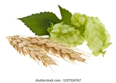 hops and spikelet isolated on white background