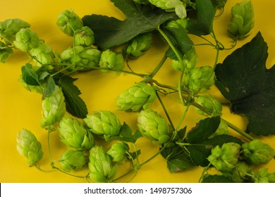 Hops twining bines. Concept of beer brewing process. Green herbal pattern on yellow background with climbing strings, hop cones and catkins. Traditional craft ingredient for brewery