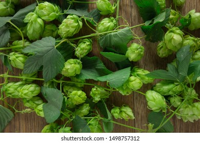 Hops twining bines. Concept of beer brewing process. Green herbal pattern background with climbing strings, hop cones and catkins. Traditional craft ingredient for brewery