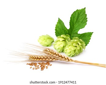 Hops and wheat on a white background