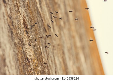 A horde of wasps attacking a stone wall
